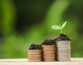 moneta-e-pianta-crescente-verde-sulla-vecchia-priorita-bassa-di-legno-del-bokeh-dell-39-albero_36597-15